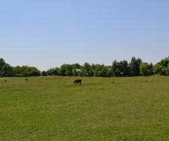 amplasamentul propus-satul-intelgent (6)