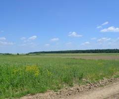 amplasamentul propus-satul-intelgent (8)